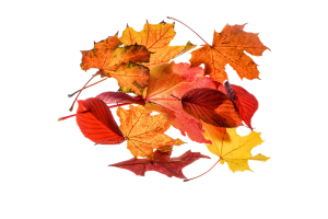 Autumn Powertex Workshops